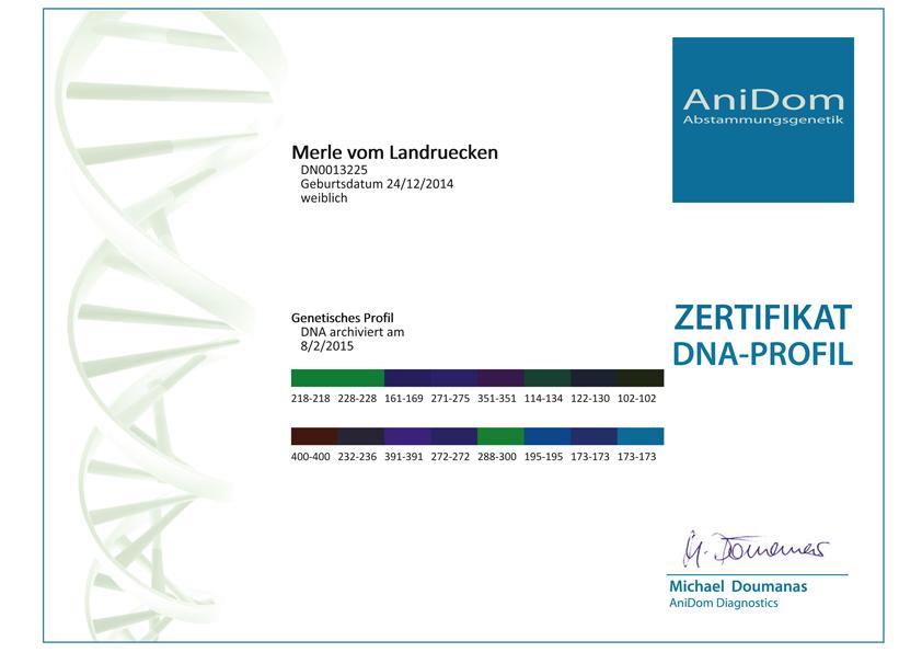 Großzügig Zertifikat Der Aktienvorlage Fotos - Dokumentationsvorlage ...