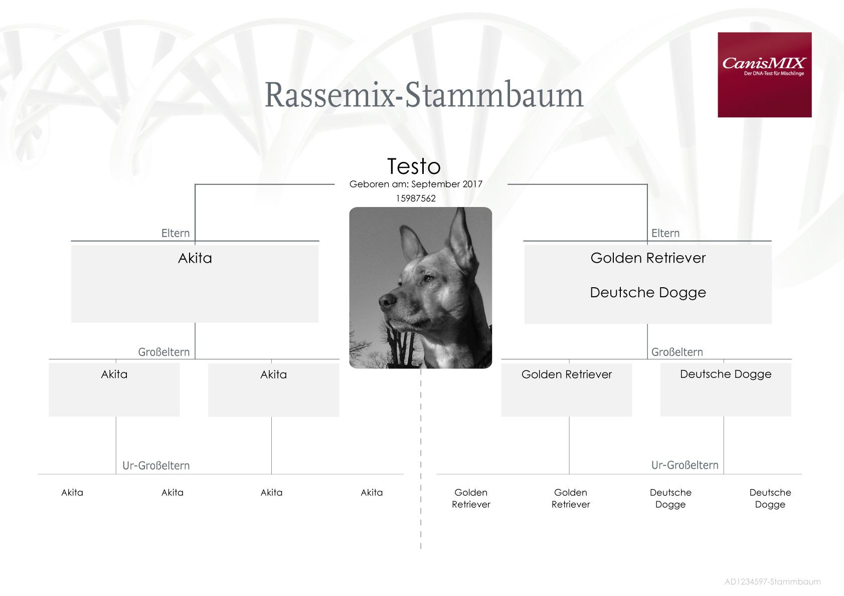 Schön Probe Preis Zertifikat Fotos - FORTSETZUNG ARBEITSBLATT ...