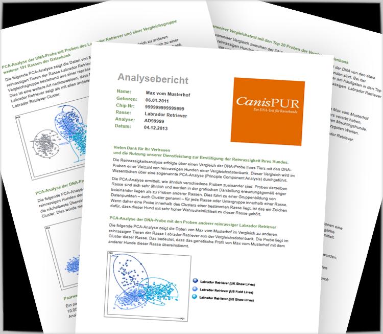 CanisPUR – der zuverlässige DNA-Test für Rassehunde